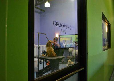 Grooming Spa