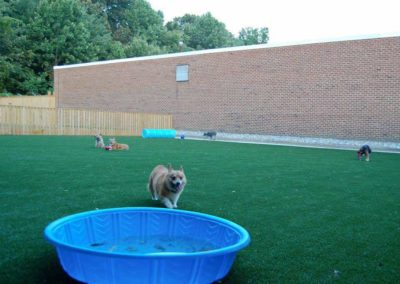 K9 Grass Play Yard